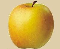 Fête de la pomme de Pélussin