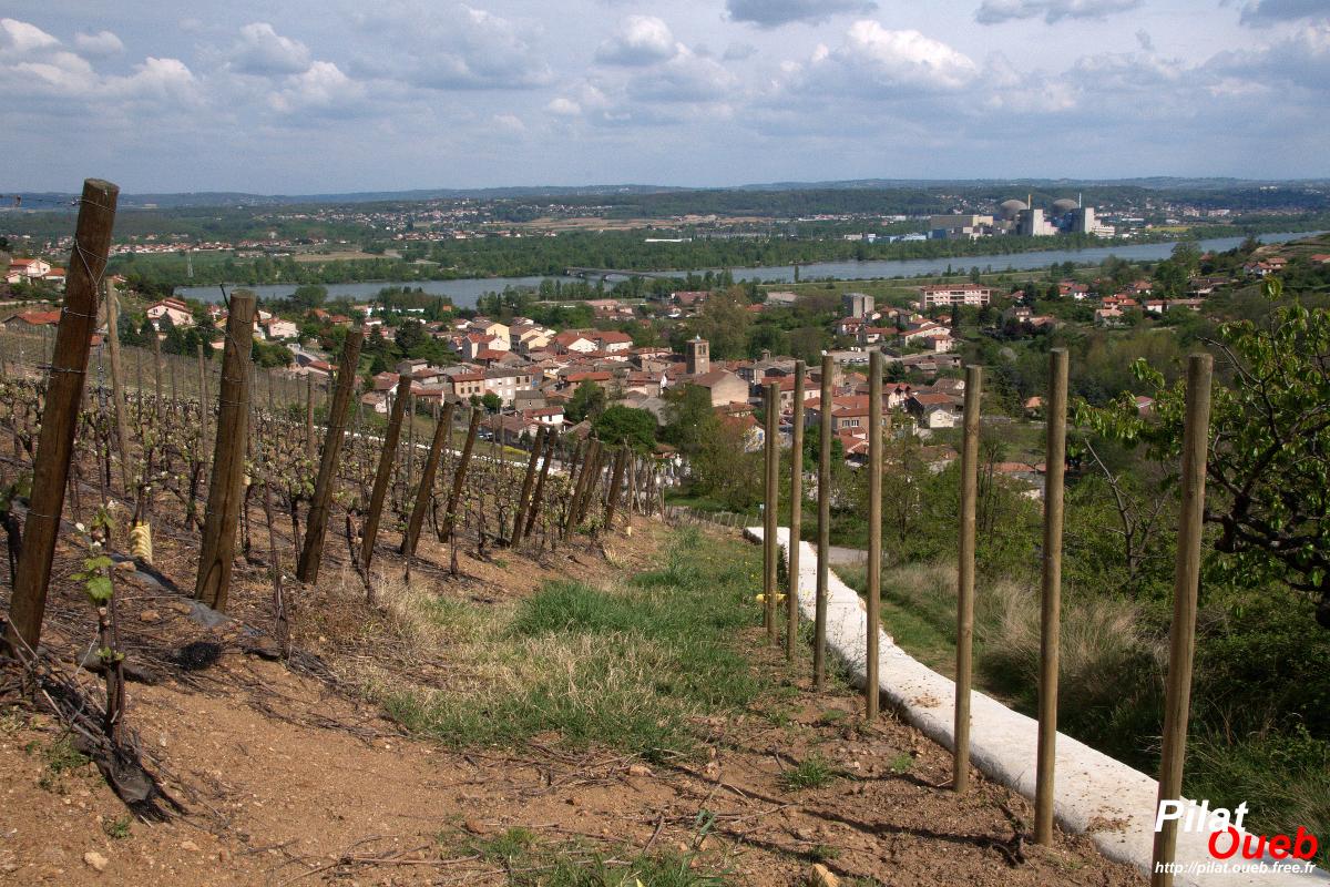 Vignes, au dessus de Chavanay<br/>(avril 2009)